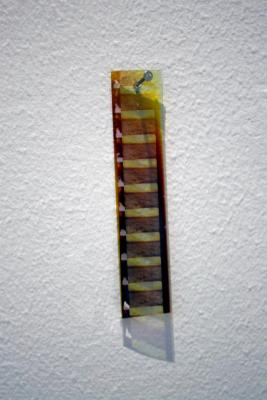 Untitled (filmstrip for a utopian horizon), 16mm filmstrip, nail, 2012